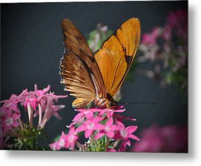 Metal Print featuring the photograph Butterfly by Savannah Gibbs