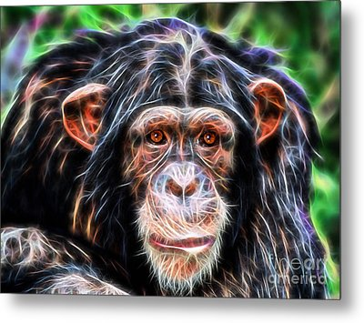 Chimpanzee Collection Metal Print by Marvin Blaine
