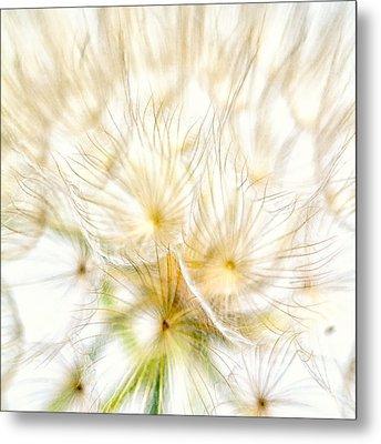 Dandelion Metal Print by Stelios Kleanthous