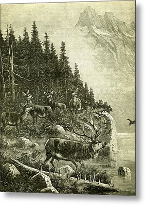 Deer Metal Print by Austrian School