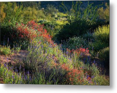 Metal Print featuring the photograph Desert Wildflowers  by Saija Lehtonen