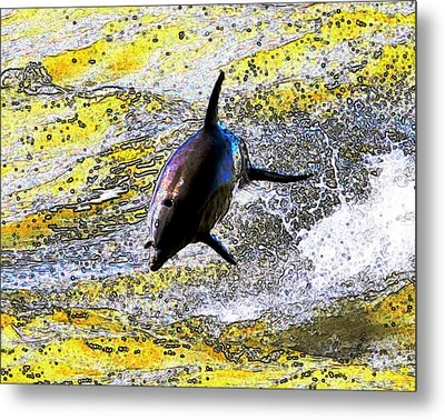 Dolphin Metal Print by John Collins
