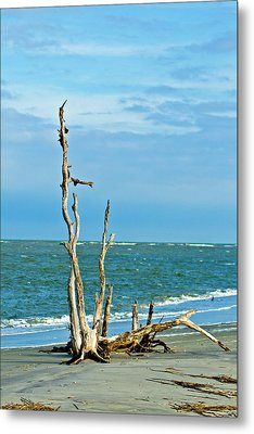 Driftwood On Beach Metal Print by Bill Barber