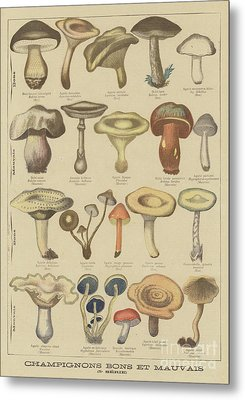 Edible And Poisonous Mushrooms Metal Print