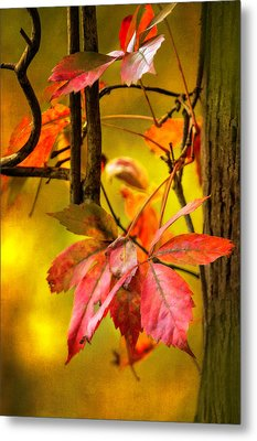 Metal Print featuring the photograph Fall Colors by Eduard Moldoveanu