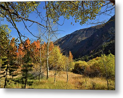 Metal Print featuring the photograph Fall In Bishop Creek  by Dung Ma