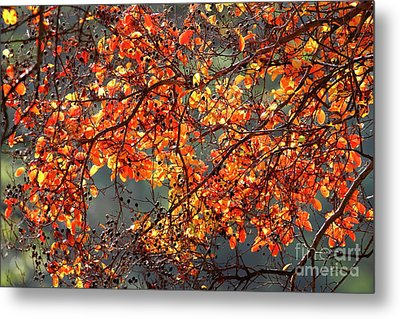 Metal Print featuring the photograph Fall Leaves by Nicholas Burningham