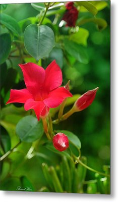 Metal Print featuring the photograph Flowers by Bernd Hau