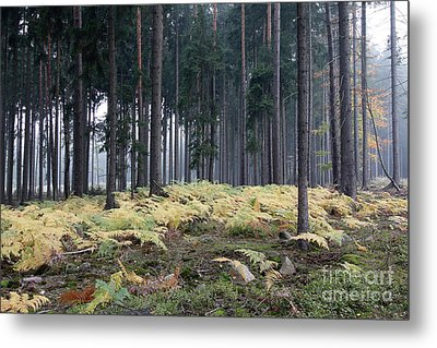 Fog In The Forest With Ferns Metal Print by Michal Boubin