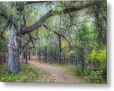 Forest In Sleeping Bear Dunes Metal Print by Twenty Two North Photography