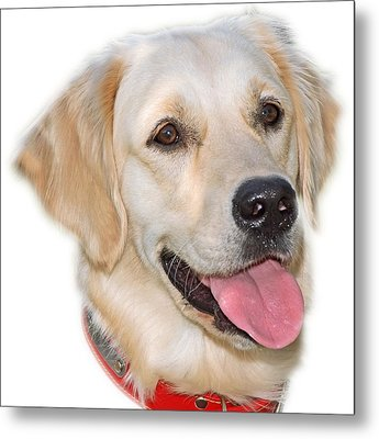 Golden Retriever Metal Print by George Atsametakis