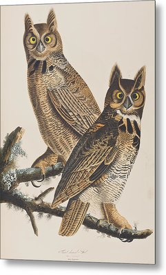 Great Horned Owl Metal Print by John James Audubon