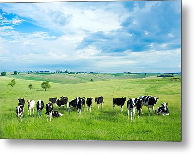 Happy Cows Metal Print by Todd Klassy
