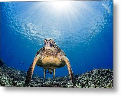 Hawaiian Turtle Metal Print