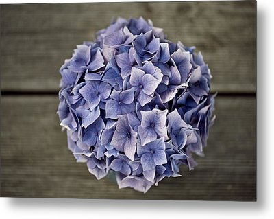 Hortensia Flowers Metal Print by Nailia Schwarz