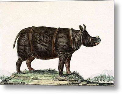 Javan Rhinoceros, Endangered Species Metal Print