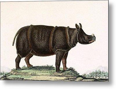Javan Rhinoceros, Endangered Species Metal Print by Biodiversity Heritage Library