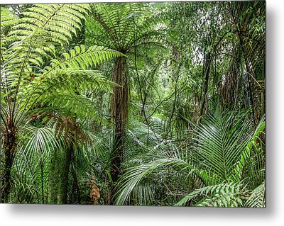Metal Print featuring the photograph Jungle Ferns by Les Cunliffe