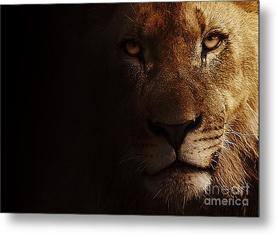 Metal Print featuring the photograph Lion by Christine Sponchia