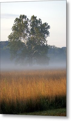 Morning Mist Metal Print by Heidi Poulin