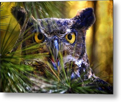 Owl In The Pines Metal Print