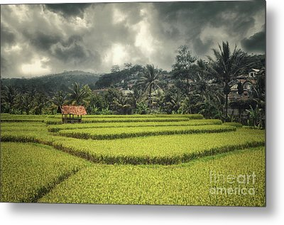Metal Print featuring the photograph Paddy Field by Charuhas Images