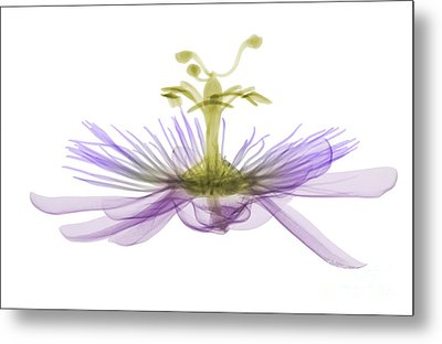 Passion Flower, X-ray Metal Print