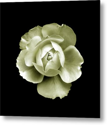 Peony Metal Print by Charles Harden