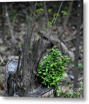 Metal Print featuring the photograph Persistence by Skip Willits