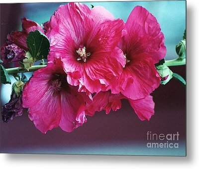 P's Hollyhocks Metal Print