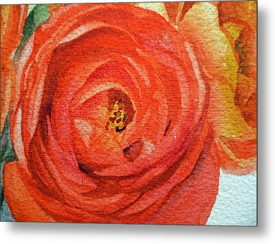 Ranunculus Close Up Metal Print by Irina Sztukowski
