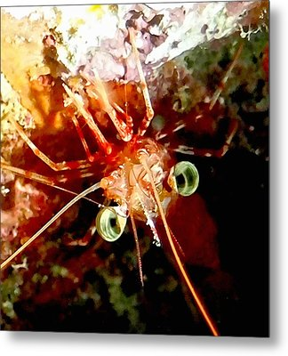 Red Night Shrimp Metal Print