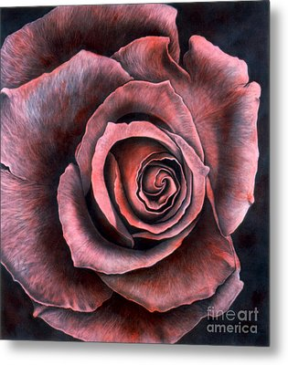 Red Rose Metal Print by Lawrence Supino