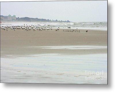Seabirds On Hilton Head Shoreline Metal Print by Angela Rath