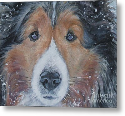 Shetland Sheepdog Metal Print by Lee Ann Shepard