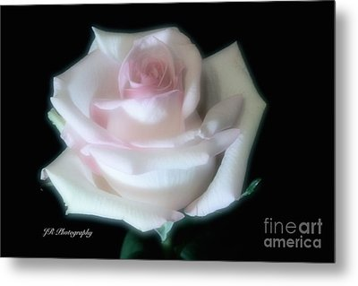 Soft Pink Rose Bud Metal Print