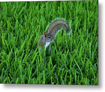 Metal Print featuring the photograph 2- Squirrel by Joseph Keane
