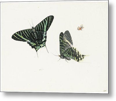 Studies Of Two Butterflies Metal Print by Anton Henstenburgh