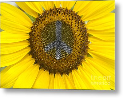Sunflower Peace Sign Metal Print