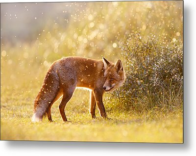 The Fox And The Fairy Dust Metal Print by Roeselien Raimond