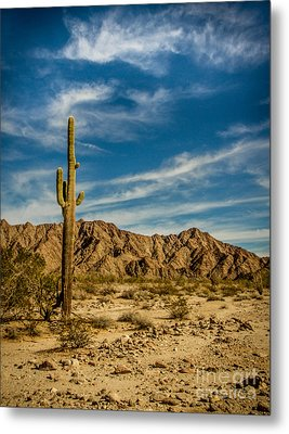 The Saguaro Metal Print by Robert Bales