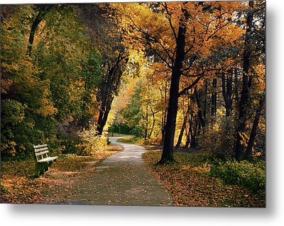 Through The Woods Metal Print by Jessica Jenney