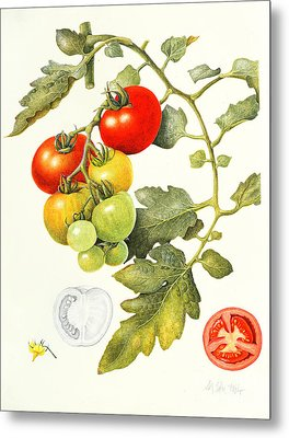 Tomatoes Metal Print by Margaret Ann Eden