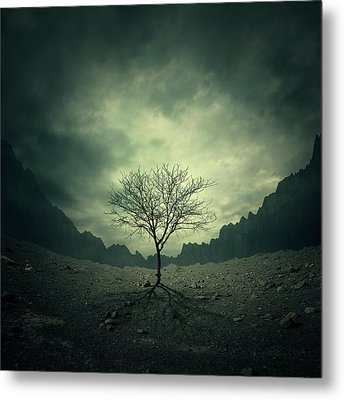 Tree Metal Print by Zoltan Toth