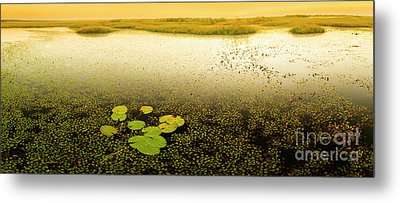 Water Lily Pads Metal Print by Tim Hester