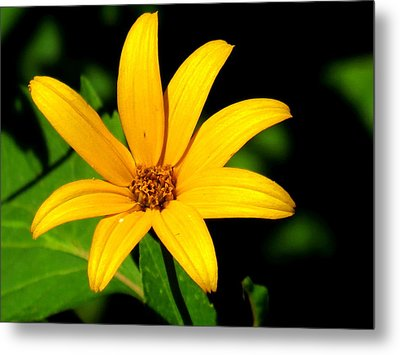 Metal Print featuring the photograph Wild Flower by Eric Switzer