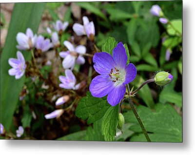 Wild Geranium Metal Print by Tim Good