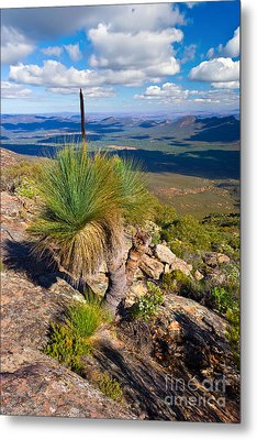 Metal Print featuring the photograph Wilpena Pound  by Bill  Robinson