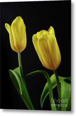 Metal Print featuring the photograph Yellow Tulips by Dariusz Gudowicz