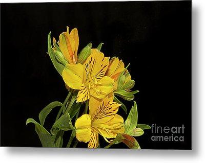 Yellow Flowers Metal Print by Elvira Ladocki